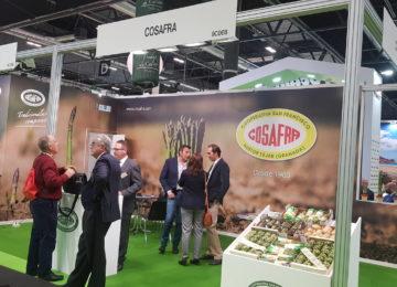 Cosafra innova sumando el romanesco a su oferta de espárrago verde y alcachofa