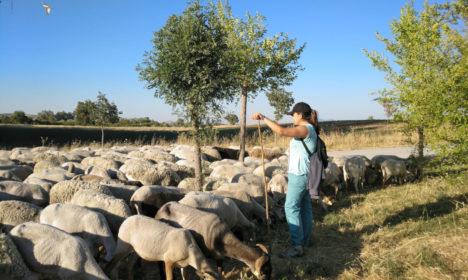 La Escuela de Pastores andaluza, reconocida a nivel nacional como actividad modelo de los Programas de Desarrollo Rural