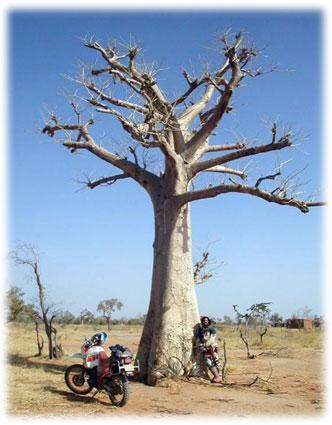 Mario junto al primer baobab de la ruta