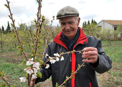 Miguel observa un cerezo florido plantado hace un año por alumnos del IES H. Lanz