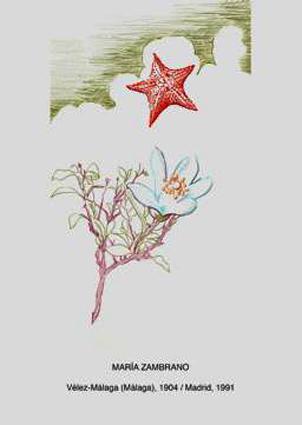 Dibujo dedicado a María Zambrano