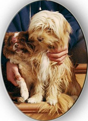 Balto y Laika, unos meses antes de morir