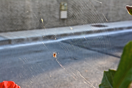 ¿acaso era parte de esa tela de araña que tenía montado el negocio de la nueva esclavitud?