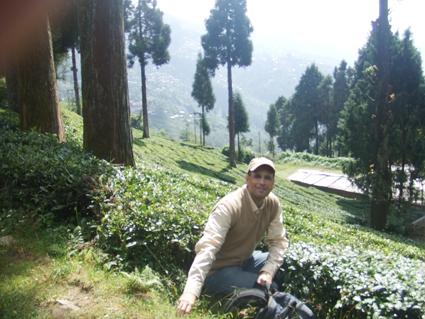 Mesquida entre las plantaciones de té de Darjeeling, buscando refugio en las altas montañas, tras sentirse abrumado por la aglomeración y el caos de Calcuta