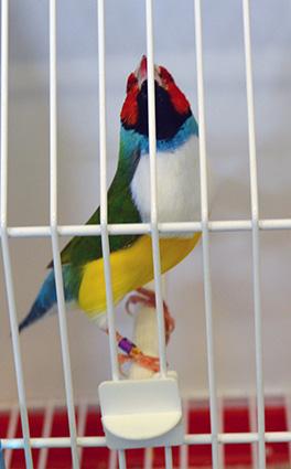 05-XLVI-ornitologia-pajaro-exotico