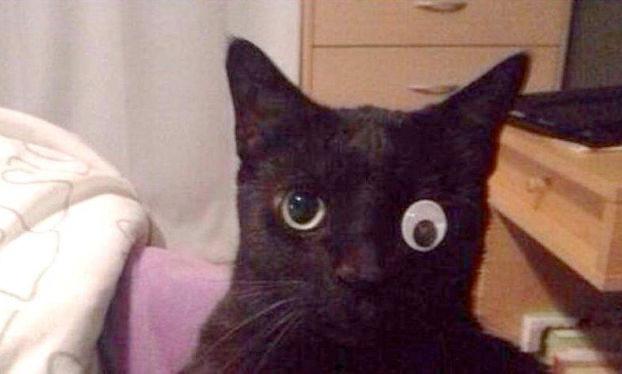 gato-ojo